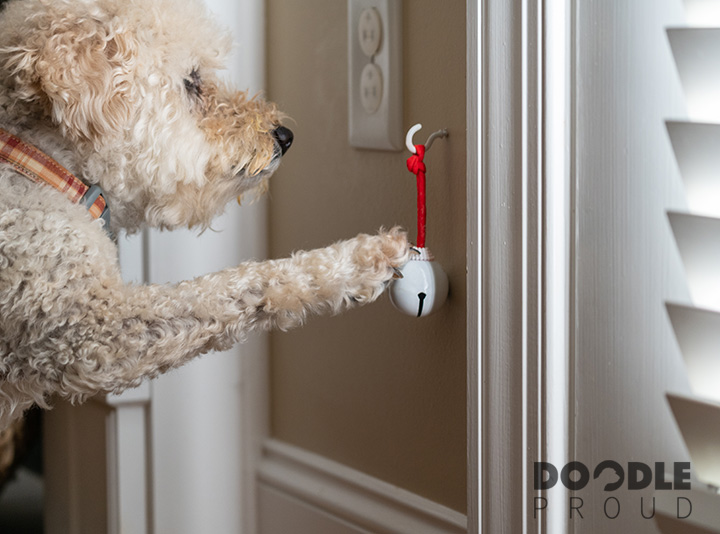Dog ringing bell hanging beside door