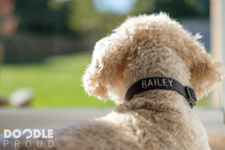 Dog wearing dog collar with name on it