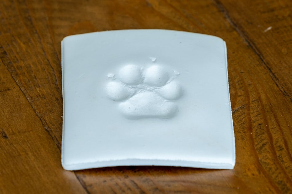 Paw print in dried clay